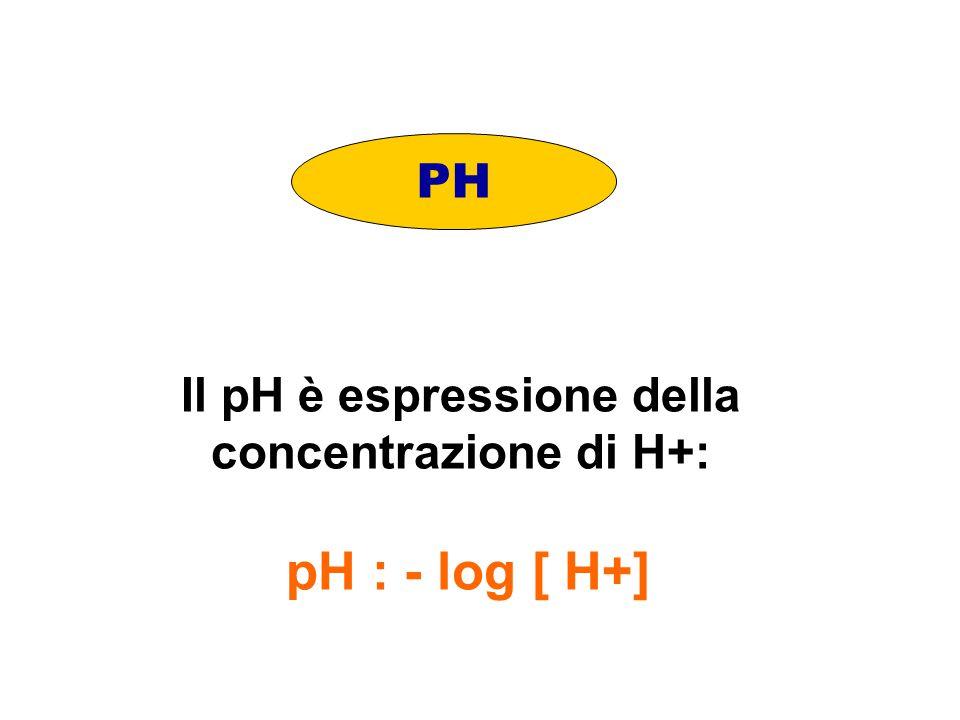 Il pH è espressione della concentrazione di H+: pH : - log [ H+]